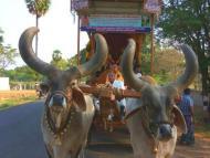 All India Padayatra