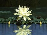 India Design Motifs – The Lotus, Part 26