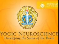 Developing the Soma of the Brain