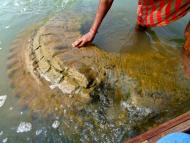 500 Year Old Temple Rises from the Mahanadi River in Odisha