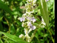 Transcendental Flowers, Part 4