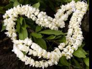 Transcendental Flowers, Part 5