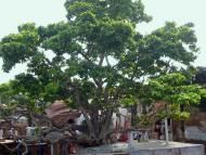 Mathura-mandala Parikrama, Part 14
