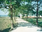Mayapur---road.jpg
