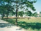 Mayapur---road1.jpg