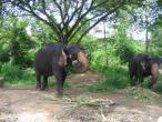 Elephant farm in Ankgor 007.jpg