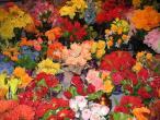 Flower shop 003.jpg