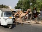 Jaipur trafic 021.JPG