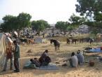 Camel festival 046.jpg