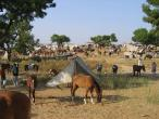 Camel festival 050.jpg