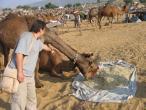 Camel festival 067.jpg