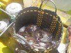 Mahabalipurnam  fishing 002.jpg