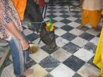 Radha Raman temple Go puja 034.jpg