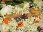 Bhakti Swarupa Damodara samadhi 03.jpg