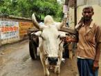 Life in India 121.jpg