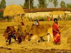 Life in India 15.jpg