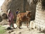 Life in India 182.JPG