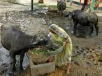 Life in India 22.jpg