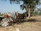 Life in India 221.JPG