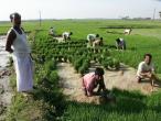 Life in India 318.JPG