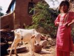 Life in India 322.jpg