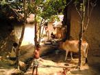 Life in India 50.jpg