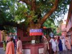 Yogapith, Mayapur 12.jpg