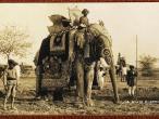 A State Elephant c1920's.jpg