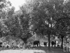 Elephants Fair Bihar1952.jpg