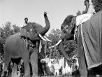 Elephants in Sonepur Bihar1952.jpg