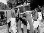 Elephants Sonepur Bihar 1952.jpg