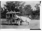 Sacred bullocks before state carriage Baroda.jpg