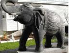 Elephant 001.jpg
