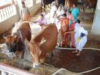 ISKCON Mayapur 050.jpg