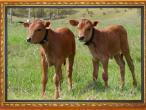 New Gokula farm 001.jpg