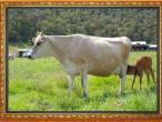 New Gokula farm 005.jpg