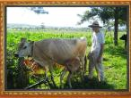 New Gokula farm 007.jpg