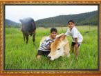 New Gokula farm 011.jpg