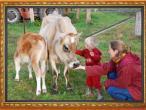 New Gokula farm 014.jpg
