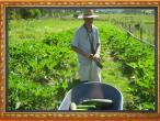 New Gokula farm 017.jpg