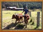New Gokula farm 020.jpg