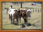 New Gokula farm 024.jpg