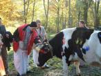 Bagadatta and cow2.jpg