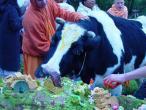 Radhadesh festival 27.JPG