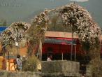 ISKCON Nepal, Goura Purnima 07.jpg
