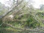 ISKCON Carriere, New Talavana, Katrina 014.jpg