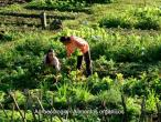 ISKCON Goura Vrindavana 070.jpg