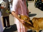 Indradymna Swami q 022.jpg