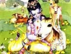 Krishna with cow.jpg