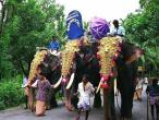 Elephang procesion.jpg